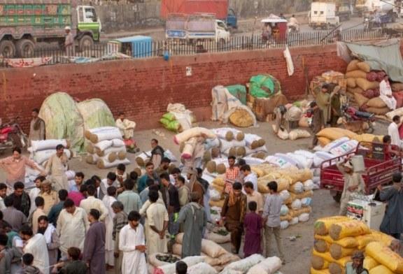 تحسين قطاع الزراعة والغذاء في إقليم البنجاب