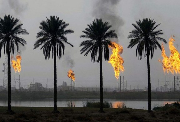 اسباب هدر ثروة النخيل في العراق