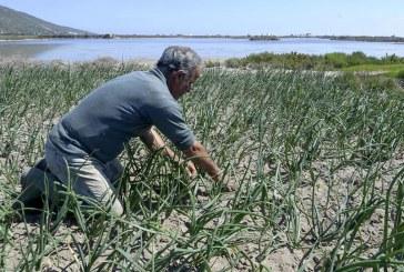 نظام زراعي فريد في العالم: البحر يسقي الخضروات إزاء شح المياه في تونس